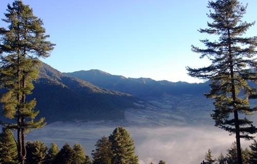 Gangtey Valley Trek