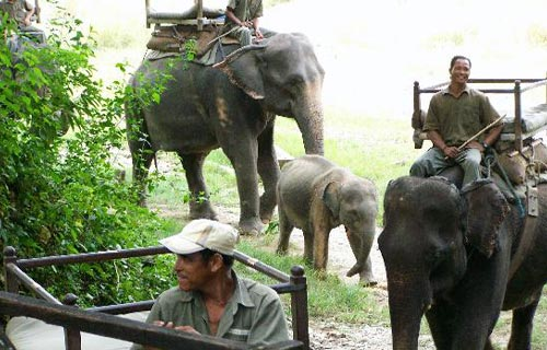 Machan Wildlife Resort, Chitwan