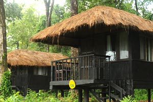 Temple Tiger Lodge, Chitwan